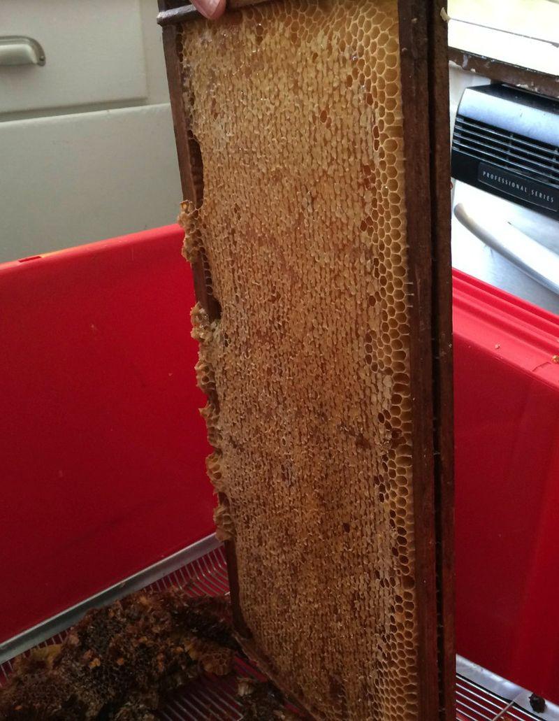 Honeycaps